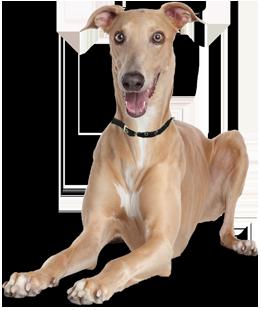 Adopt A Small Dog Ontario
